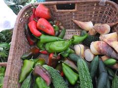 有機農業種出生物多樣性,不但顯於物種也隱於基因。