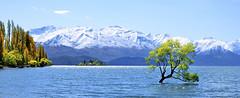 Lake Wanaka / Wanaka / New Zealand