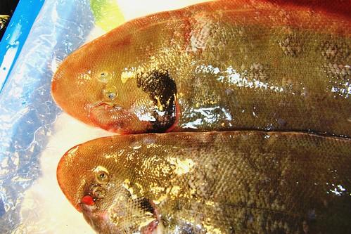 比目魚的眼睛出生時在身體兩側,但隨著年紀長大,眼睛會慢慢「搬家」搬到同一側。