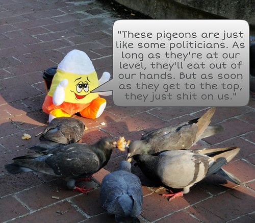 How some politicians are like pigeons