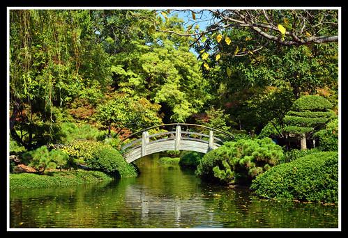 "fish nikon texas landscaping koi dfw streams ponds ictus d7000 ""japanesegardens"" ""northtexas"" ""nikond7000"" ""texastowns"" ""ictusphotography"" ""ricardoruizdeporras"" ""dallasfortworth"" ""dfwmetroplex"" ""texaslandscape"" ""botanicgardens"" ""fortworthbotanicgardens"" ""fishponds"""