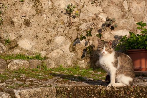 Il gatto di Roccasecca