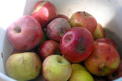 plant(0.0), nectarine(0.0), pluot(1.0), produce(1.0), fruit(1.0), food(1.0), apple(1.0),
