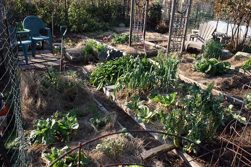 october vegetable garden plot 009