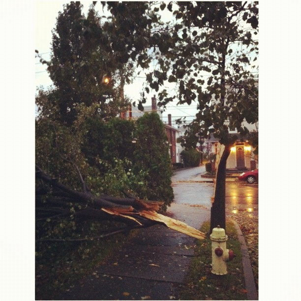 Lost a tree out front. It barely missed the house! #squaready #sandy #treedown