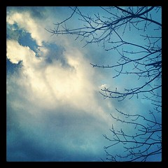 Morning #sky after #Sandy #newhampshire #clouds #tree #fall #newengland #picoftheday #sun