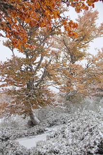 2012_10_28_IMG_1635