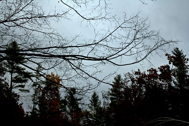 gray fall afternoon