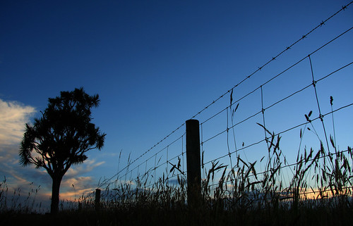 blue sunset newzealand sky silhouette fence evening sundown south icon canterbury nz barbedwire grasses taiko bluehour cabbagetree iconic aotearoa fenceline kiwiana cordyline