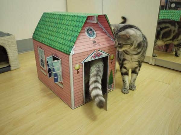 5QQ:這是我的新家嗎?