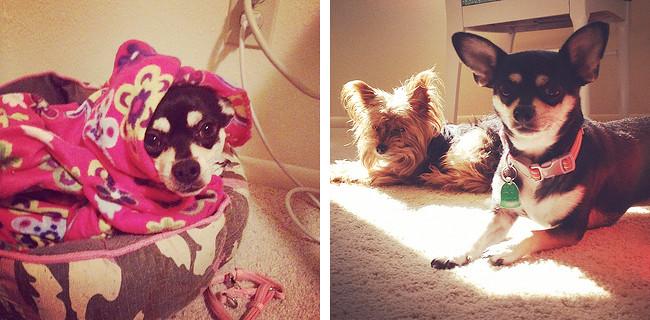 Jessie Pets Chloe