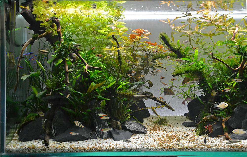 120cm aquascape
