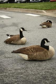 Ducks sitting in shopping mall