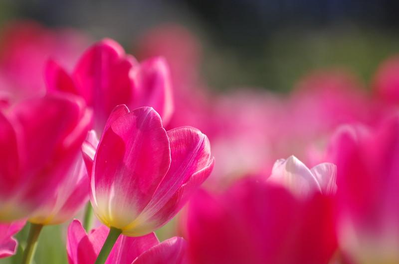 春天花會開~ Spring , 2013