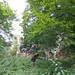 Tereny gęsto zielone za zamkiem w Głogówku by Polek