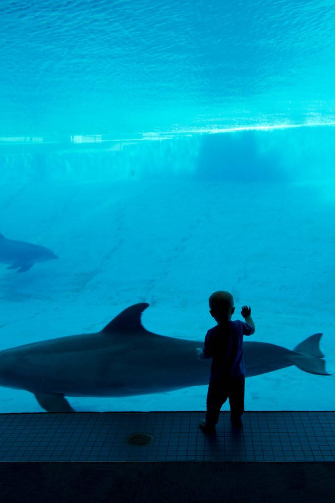 Texas State Aquarium-026.jpg