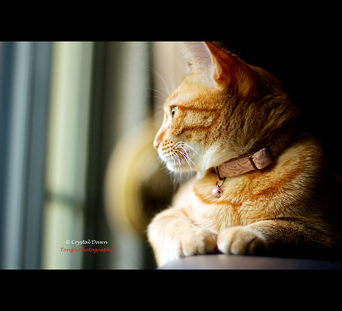 Lazy Afternoon by © Crystal Dawn Photography