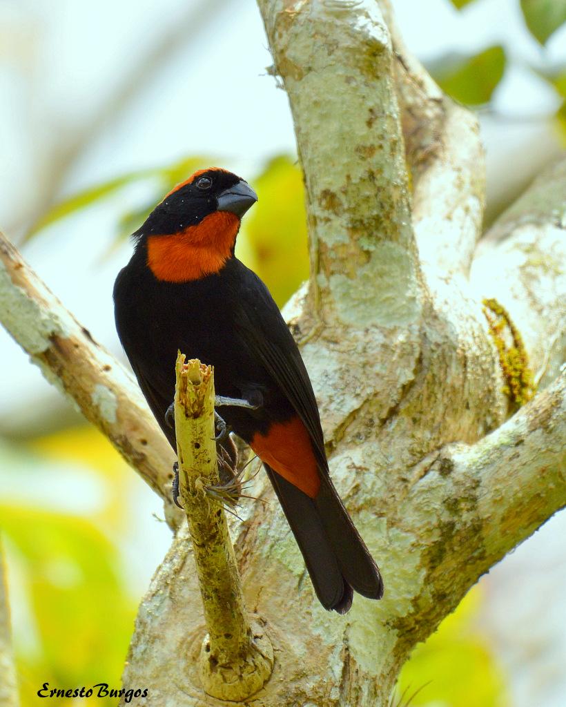Birding Chubut Birdwatching in Chubut
