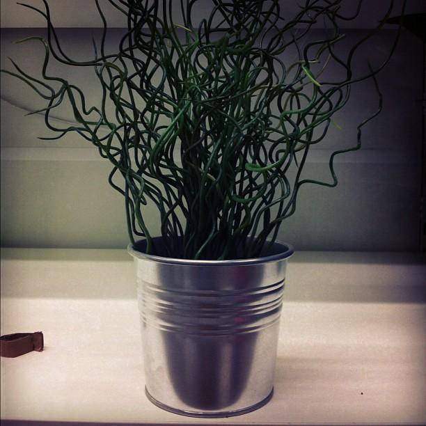 """Vaso para o @jorgewho com a planta """"opção 2"""""""