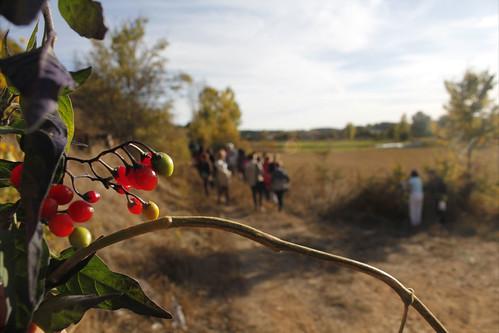 El otoño en tu paladar 2012