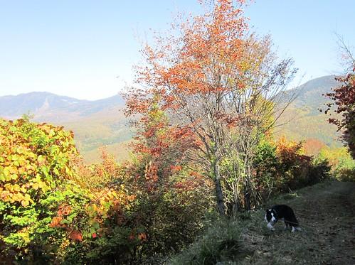 八方台下り道の紅葉とランディ 2012年10月16日11:14 by Poran111
