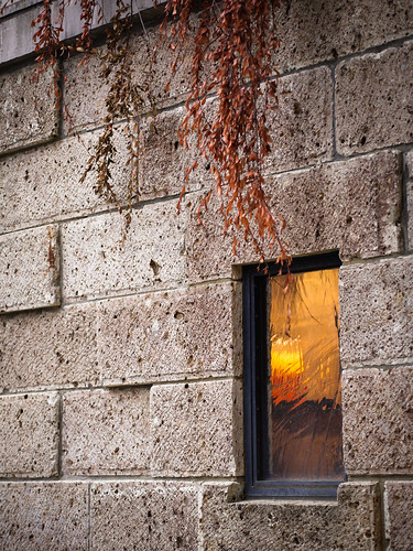 wall & window & leaves by hyossie