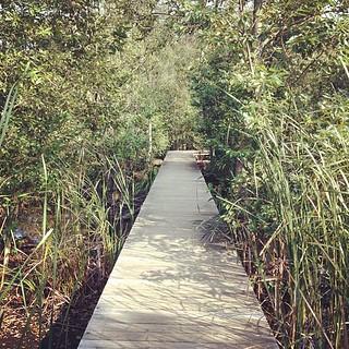 今日は通勤ランで遠回りして矢川緑地の木道を通ってきました。ここはビオトープなどがあり自然の生態系を活かしており、地元の人のオアシス的な場所になっています。