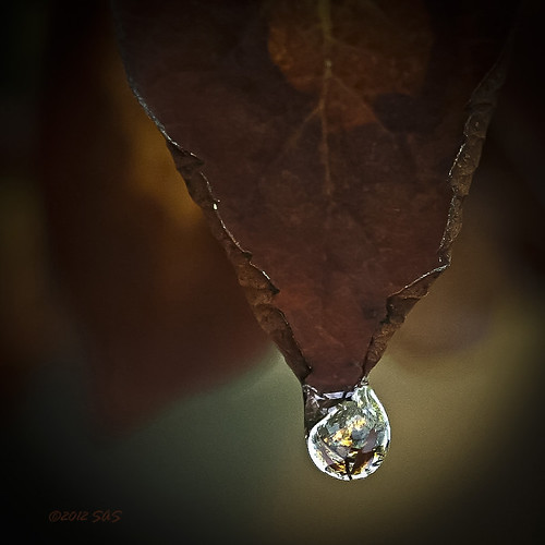 within a water drop by axiepics