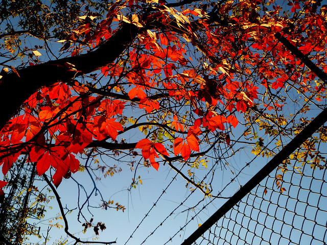 I miss you most of all, my darling... when autumn leaves start to fall