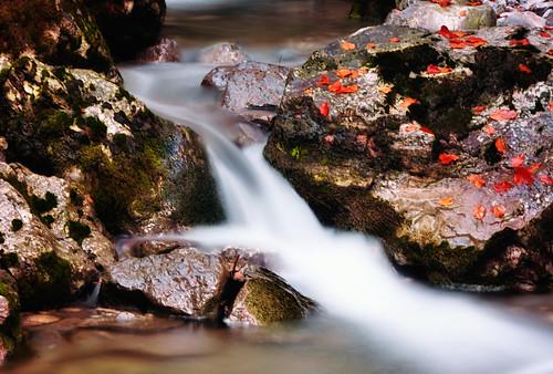 autumn light nature water switzerland nikon 2012 ceca67