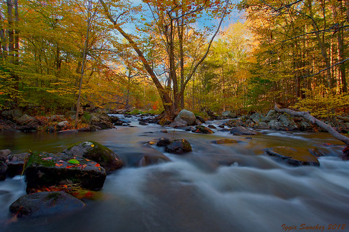 autumn trees fall colors river newjersey stones wanaque