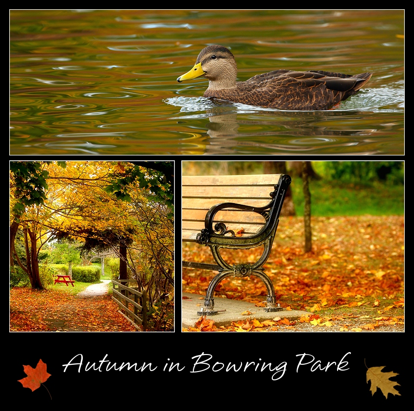 Autumn in Bowring Park