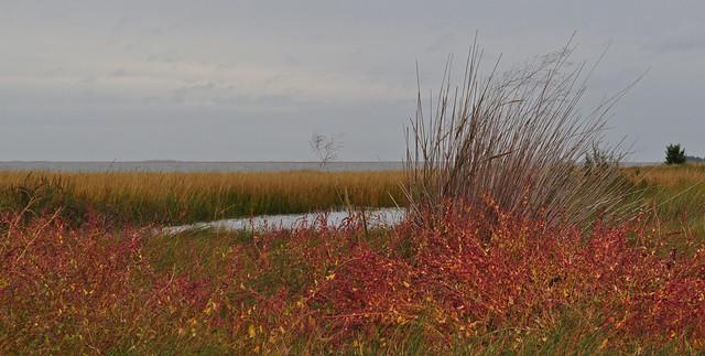 Metompkin Bay (5)