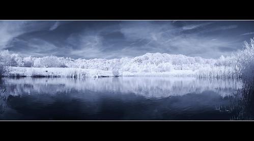 trees panorama lake reflection photoshop nightshot infrared photomerge sonyf717 hoyar72 channelswap haidand8