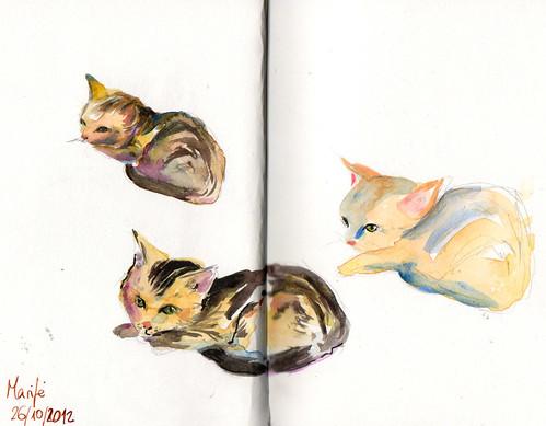 Marifé la gata