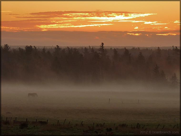 P1290108_horses_sunrise