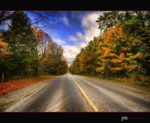flower colour fall roadside