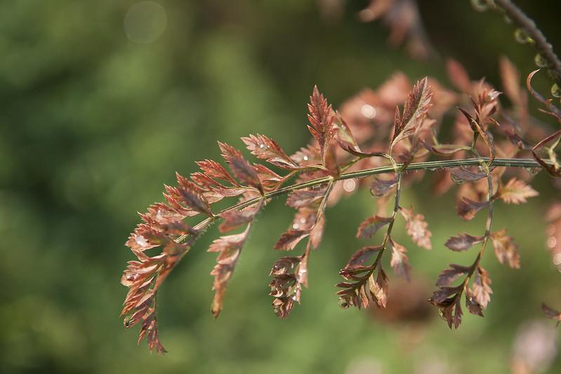 leaves glisten