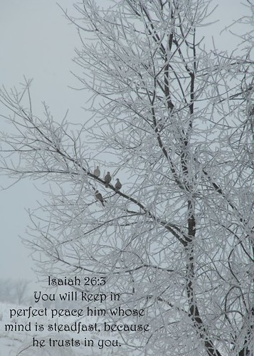 Birds in a icy tree