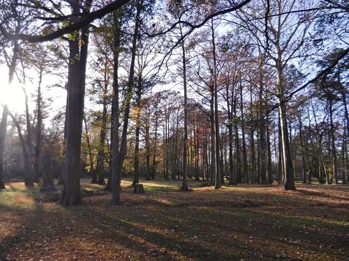 park trees southwest fall northcarolina greenville greenspringspark