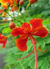 Singapore 2012 Botanical Garden