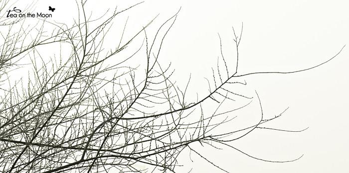 Niebla010