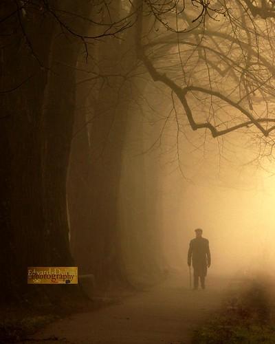 trees kilkenny ireland mist man nature silhouette fog forest landscape atmosphere eire emeraldisle irlanda ierland leinster cillchainnigh bestcapturesaoi flickrbronzetrophygroup edwarddullardphotographykilkennycityireland weddingphotographerkilkenny 9deanstreetkilkenny