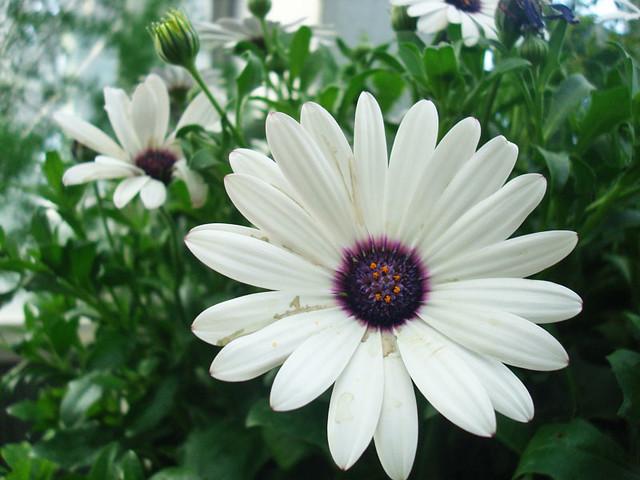 conservatory-flowers