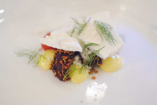 beetroot, meyer lemon, fennel, white chocolate, pistachio (animal)