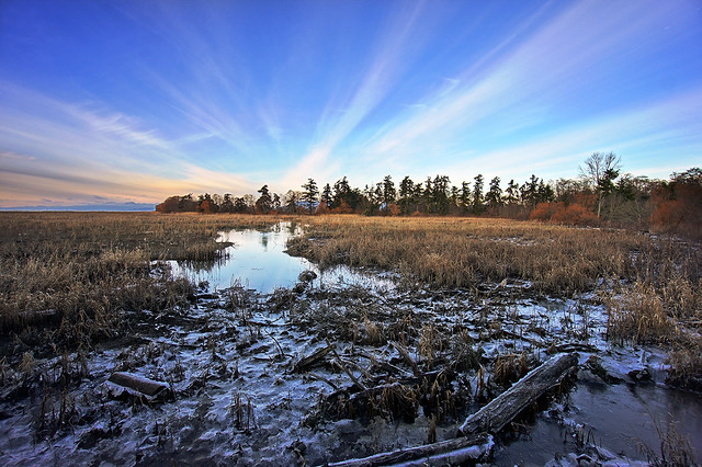 Freezing Marsh in Winter
