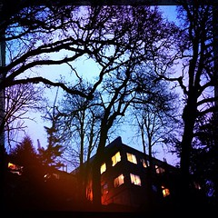 Looking up at offices on the bluff. #hipstamatic trees #pdx #westmoreland #winter