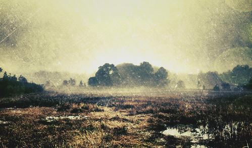 [フリー画像素材] 自然風景, 草原・草, 霧・霞 ID:201302072000