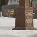La fleur jaune du cimetière Saint-Louis
