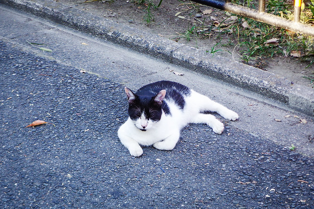 Today's Cat@2016-08-26